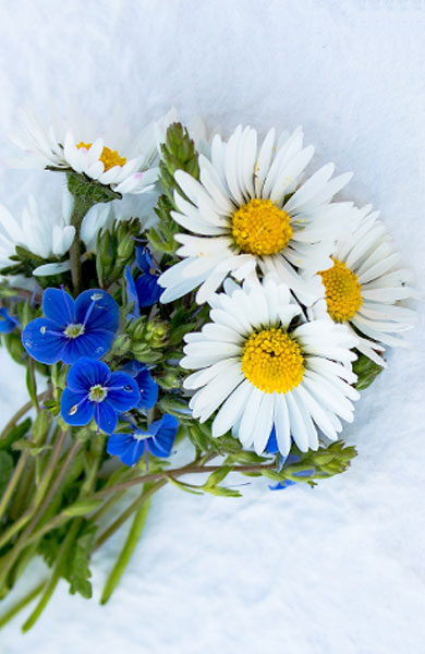 flower-item-6